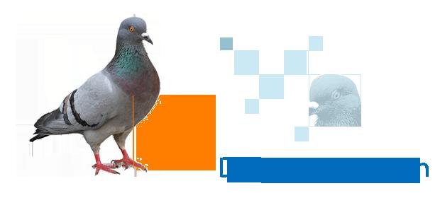 Actualit s se d barrasser des pigeons aphysio - Se debarrasser des pigeons ...